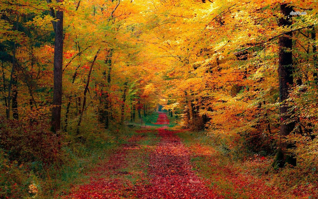 fall woods backgrounds wallpapers - photo #12